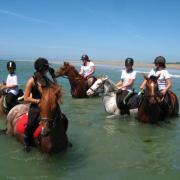 Natation pour chevaux!!