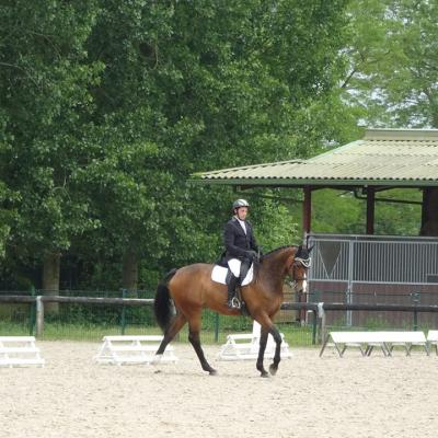 dressage amateur mesnil st Laurent